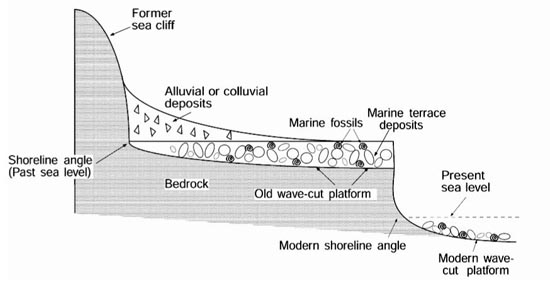 Wave cut cliff diagram images for Definition for terrace