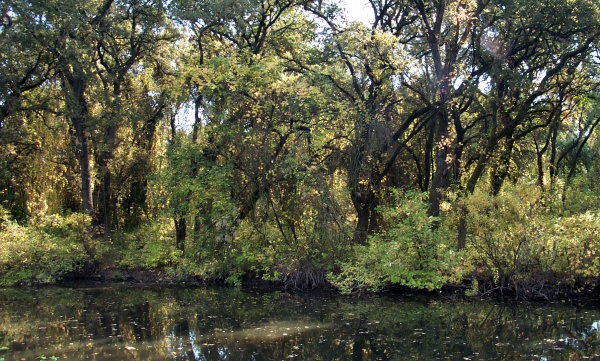 an analysis of the cosumnes river habitat restoration project